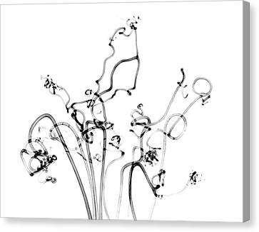 Plant Tendrils Canvas Print by Albert Koetsier X-ray