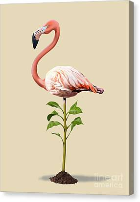 Flamingo Canvas Print - Planted Colour by Rob Snow