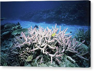 Aquatic Plant Canvas Print - Plants Undersea, Okinawa Prefecture by Panoramic Images