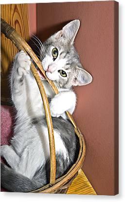 Playful Kitten Canvas Print by Susan Leggett