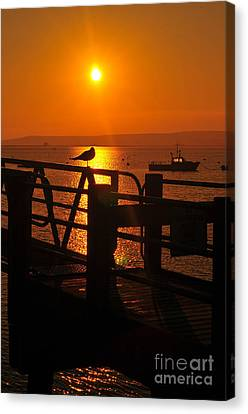 Plymouth Harbor Sunrise Canvas Print by Catherine Reusch  Daley