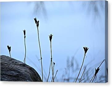 Pods On Pond Canvas Print
