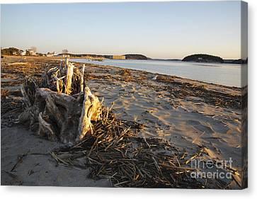 Popham Beach State Park - Phippsburg Maine Usa Canvas Print by Erin Paul Donovan