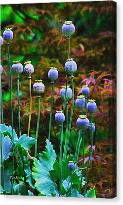 Poppy Seed Pods Canvas Print by Tom Janca