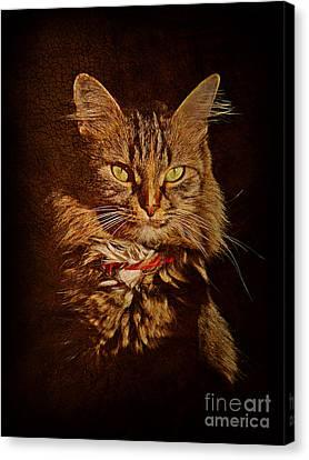 Portrait Of A Tramp Cat Canvas Print