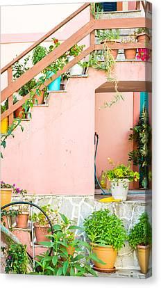 Pot Plants Canvas Print