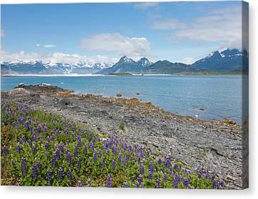 Prince William Sound, Alaska, Lupine Canvas Print by Hugh Rose