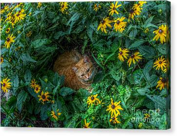 Mary King Canvas Print - Princeton by Mary  King
