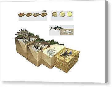 Process Of Fossilization Canvas Print