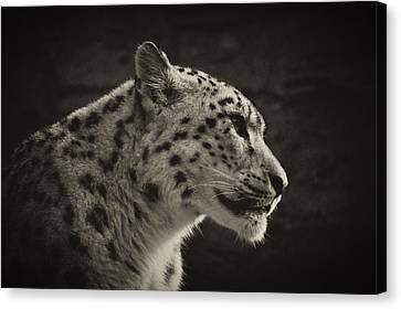 Canvas Print featuring the photograph Profile Of A Snow Leopard by Chris Boulton