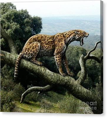 Promegantereon Sabretooth Cat Canvas Print by Mauricio Anton