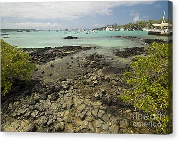 Puerto Ayora Canvas Print by William H. Mullins