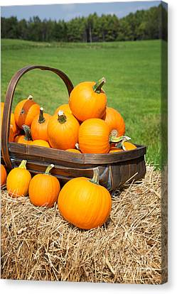 Small Basket Canvas Print - Pumpkins For Sale by Jane Rix
