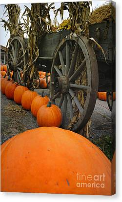 Pumpkins With Old Wagon Canvas Print