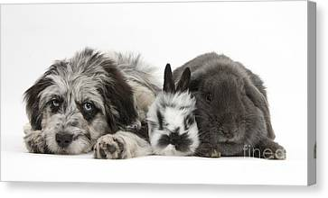 Puppy And Rabbits Canvas Print