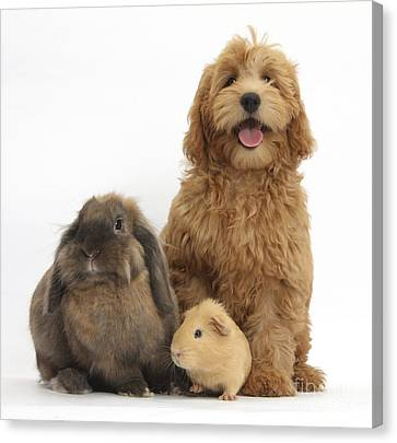 Puppy, Rabbit And Guinea Pig Canvas Print by Mark Taylor