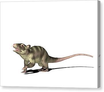 Purgatorius Prehistoric Mammal Canvas Print