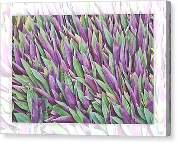Canvas Print featuring the photograph Purple And Green by Holly Kempe