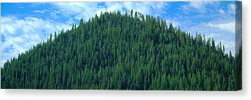 Pyramid Of Pines, Smith Ferry, Idaho Canvas Print by Panoramic Images