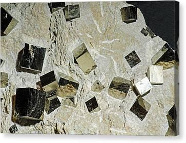 Inorganic Solid Canvas Print - Pyrite by Millard H. Sharp