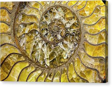 Pyrite Canvas Print - Pyrites Ammonite Spiral Calcite Crystals by Paul D Stewart