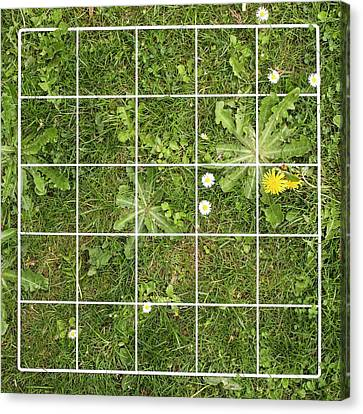 Quadrat On A Lawn With Weeds Canvas Print by Science Photo Library