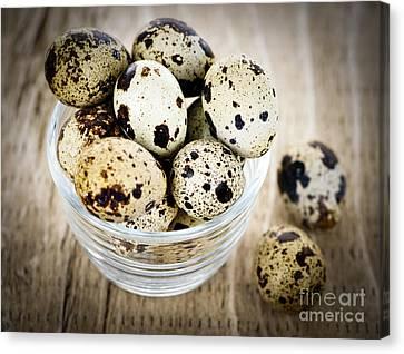 Quail Eggs Canvas Print