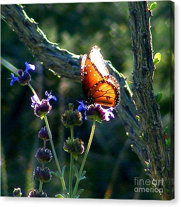 Queen Butterfly Canvas Print by Marilyn Smith