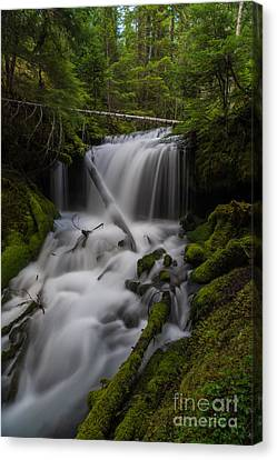 Quiet Falls Canvas Print by Mike Reid