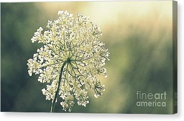 Quiet Moment Canvas Print by France Laliberte