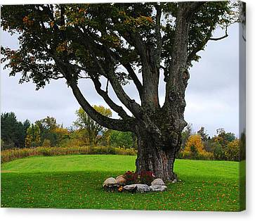 Quiet Tree Canvas Print by Stephanie Grooms