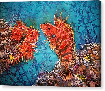 Quillfin Blenny Canvas Print by Sue Duda