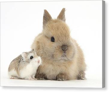 House Pet Canvas Print - Rabbit And Roborovski Hamster by Mark Taylor