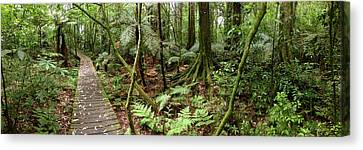 Rain Forest Canvas Print by Les Cunliffe