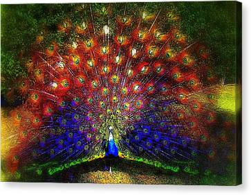 Canvas Print featuring the photograph Rainbow Peacock by Jodie Marie Anne Richardson Traugott          aka jm-ART