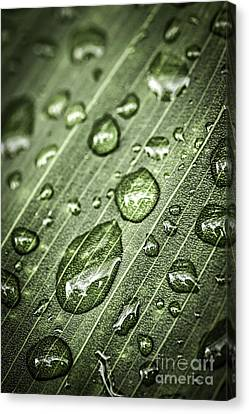 Raindrops On Green Leaf Canvas Print
