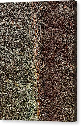 Raspberry Leaf Trichomes Canvas Print