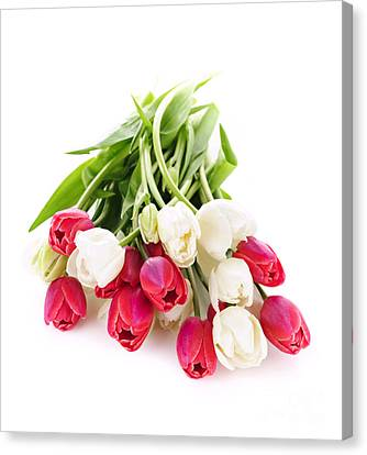 Red And White Tulips Canvas Print