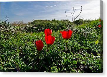 Red Anemone Canvas Print by Arik Baltinester