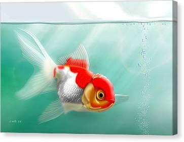 Red Cap Goldfish Canvas Print