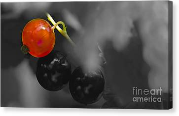 Red Currant Fruit Splash Color Canvas Print by Heiko Koehrer-Wagner