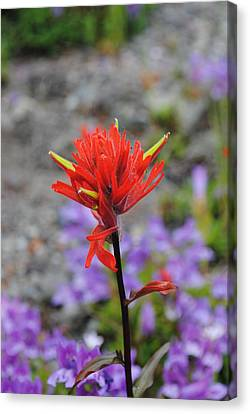 Red Paintbrush  Canvas Print by Robert  Moss