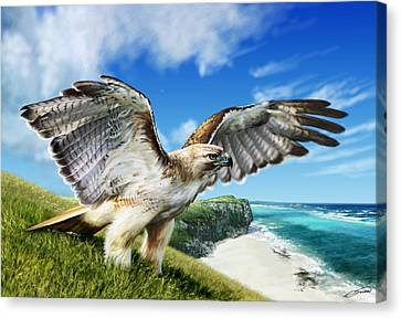 Red-tailed Hawk Canvas Print by Owen Bell
