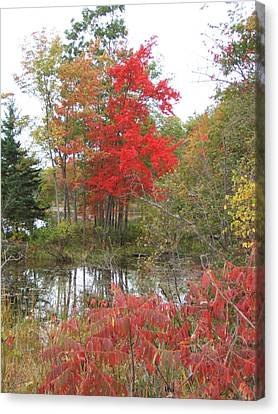 Red Tree Canvas Print by Margaret McDermott