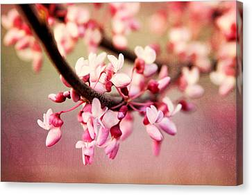 Canvas Print featuring the photograph Redbud Blossoms by Trina  Ansel