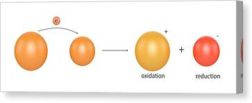 Redox Reactions Canvas Print by Science Photo Library