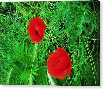 Remembrance Of First World War Canvas Print