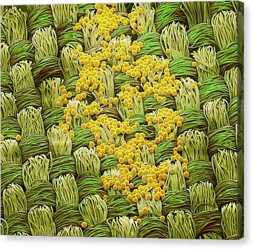 Retroreflective Beads Canvas Print