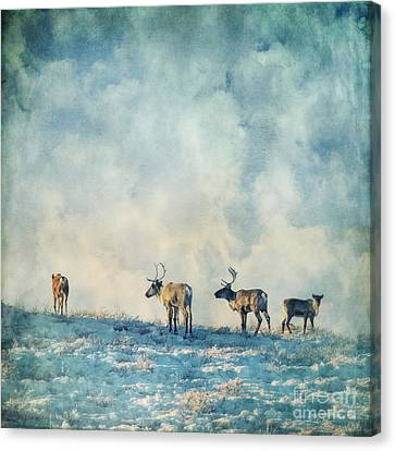 Roam Free Canvas Print by Priska Wettstein