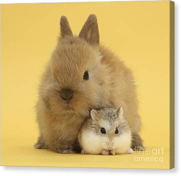 House Pet Canvas Print - Roborovski Hamster And Rabbit by Mark Taylor
